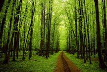 fondo bosque