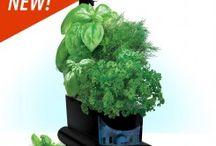 Gardening FAVORITES / Gardening and growing things