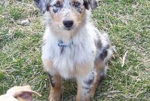 I want a puppy! / by Jennifer Kerns