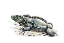 Reptiles and Amphibians Illustraciencia