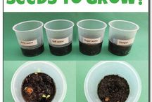 What liquids help seeds grow ?