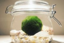 Aquarium / Water container gardens, Indoor ponds and plants for them, Aquascaping