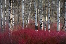 pomysły do leśnego ogrodu (woodland) / woodland