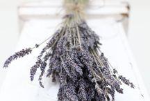 Lavender Inspiration  / by Cynthia@ Beach Coast Style.com