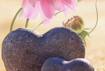 серце светка
