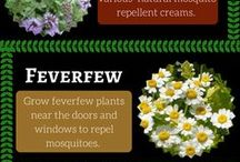 Piante repellenti zanzara