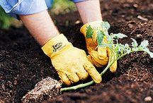 zahrada,rady,nápady..