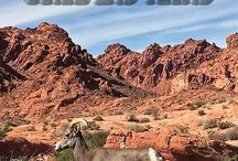 Nevada / Best of Nevada's attractions, adventures, culture, food, and accommodations