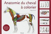 Livres / La Sellerie de la Chambrière offre une grande variété de livres en français sur l'équitation classique et western. Vous trouverez aussi les manuels de formation de la Fédération équestre du Québec.