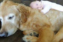 Děti a psy.