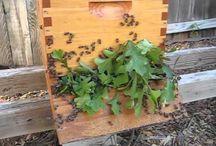 Beekeeping / Hobby / by LouAnne