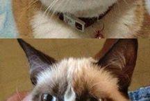 Cats / Cats!!!!!!!!