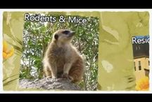 Pest Control Videos Dallas Fort Worth / Ameritech Pest Control has grown to over 30 pest control technicians since 1982 and over 50,000 satisfied customers all over the Dallas Fort Worth Metroplex.