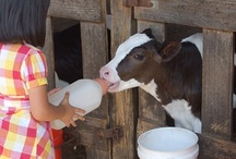 #Givethanks4dairy @instagram contest! #pinspiration / Our #dairy farmers mean the world to us and so we want to give thanks for all they do each day with our November Instagram contest! It's not too late to join!