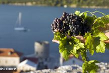 Learning about Croatian wines