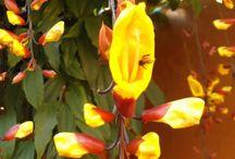Flores pra jardim