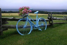 bicycles / by Tina Fichtel