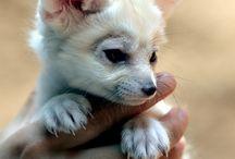 I love animals!!!!