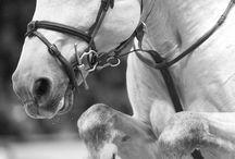 hestee