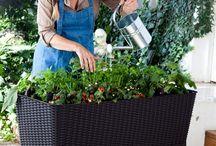 Gardening / by Shawna Bender