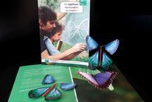 Le Papillon Magique Prestige / Les grands moments du Papillon Magique !