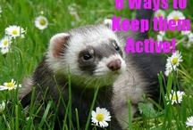 Ideas for our ferret