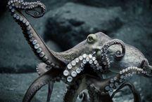 ∶ Innsmouth / H. P. Lovecraft's works