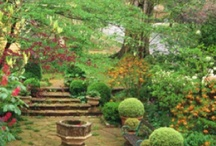 Landscaping & Yard Dreams / by Pam Griggs