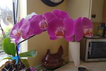 Orchids / My Orchids