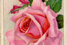 Roses/Flowers / by Kay Pendergrass