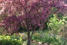 AL RU Farm Garden