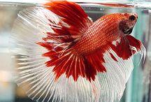 aguarium fish