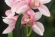 Fine blomster =)