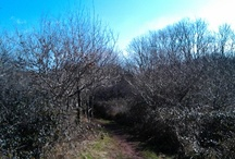 """my favourite walks / Occombe Woods. Occombe means """"Valley of the Oaks"""""""