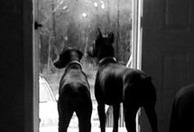 dogs / by Tomi Omel