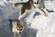 słitaśne wilki