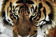 Animals  / by Maggie Strout
