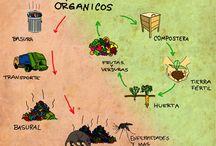 Huerto Urbano / Como crear y mantener tu propio huerto.