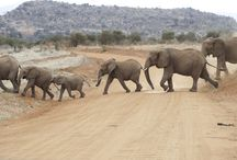 I love Elephants!!!!!! / Elephants have always been a compassionate mammal.  I <3 Elephants.