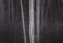 Photography - Ansel Adams
