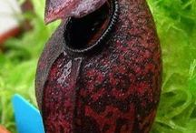 Carnivorous plants awesome