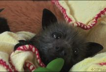 Baby Bat cuteness ❤️