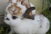 Bunnies / The wonderful world of bunnies. / by Buzzy Multimedia