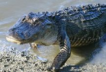 Area Wildlife / Lots of Wildlife to see in the Area #myrtlebeachrealestate