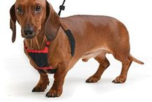 dachshund harness / hoping to find the perfect harness for doxies to use