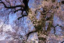 Tavasz Természet
