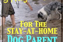 The Stay-At-Home Dog Person / Tips and tricks to help you look after your dog while you work from home, or make the transition to being a stay-at-home dog person.