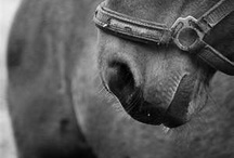 Horsess <3 / It's my life what'cha gonna do. / by Bailey Gale