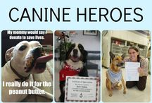 Canine Blood Donation at Kingsbrook Animal Hospital / Once a month Blue Ridge Veterinary Blood Bank visits us here at Kingsbrook Animal Hospital. Do you have a dog that could be a canine hero? #Animal Hospital #Veterinarian #Pets #KAH #FrederickMaryland #CanineHeroes #BlueRidge #BloodBank