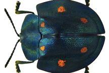 Bugs n beetles
